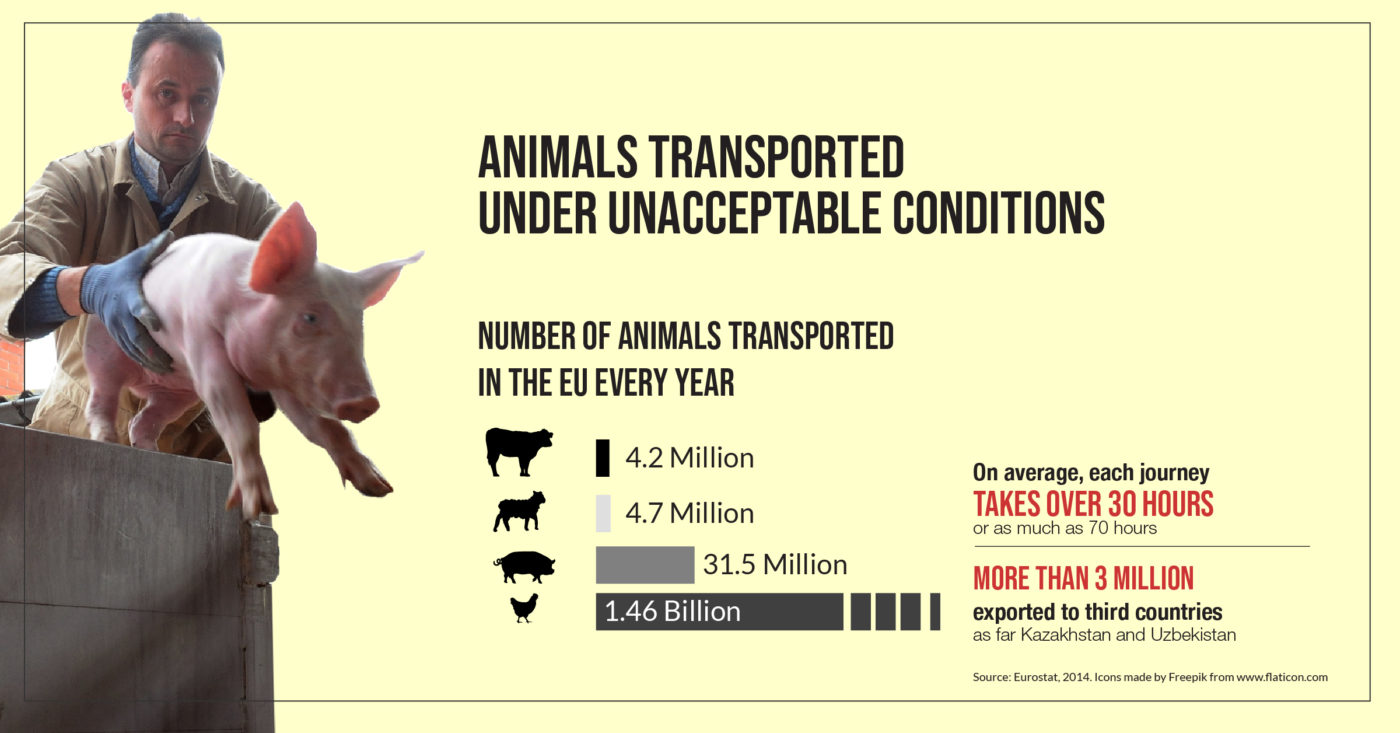 Does the EU respect animal welfare during transport? - an